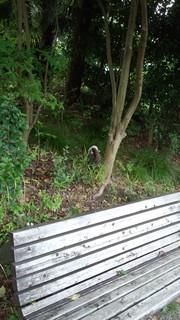 170703_081114077菊名池でジャバン!みたらびしょびしょの猫が.jpg